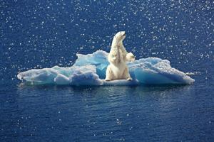art stock charts nature iceberg polar bear