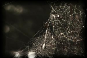 web halloween tale