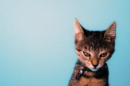 ominous-alien-message-cat