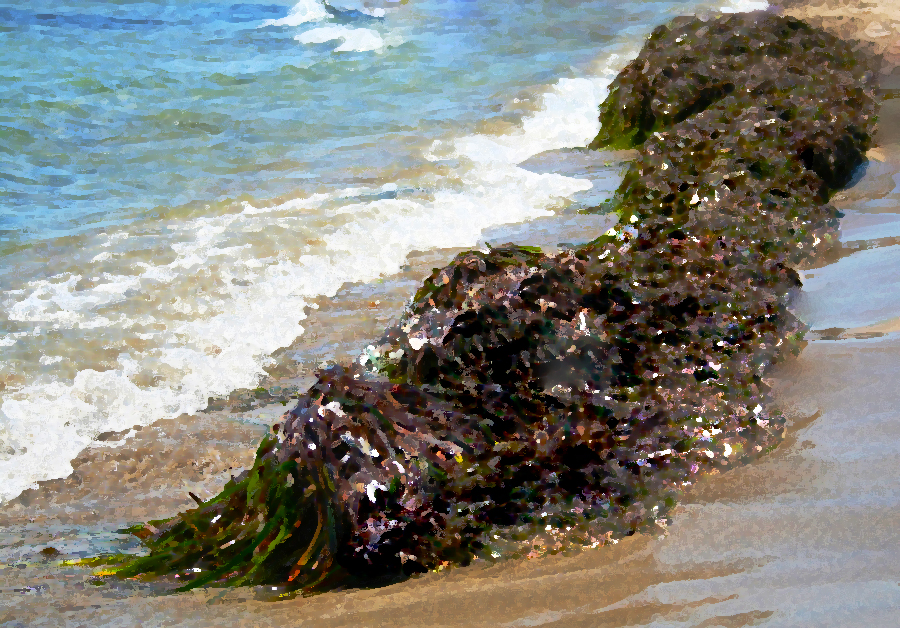 sea-drowned-fable -fiction-seaweed